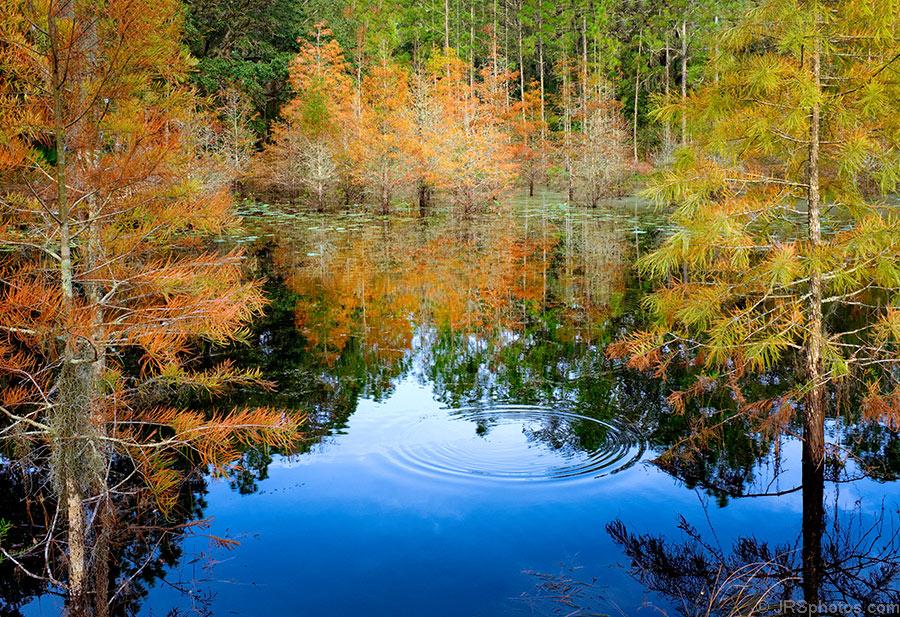 Jrs Red Lake >> » autumn JRSphotos.com